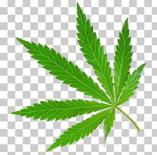 Medical Cannabis Legality Of Cannabis Cannabis Smoking Medical Marijuana Card PNG