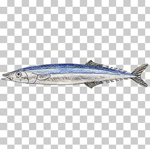 Sardine Pacific Saury Mackerel Oily Fish Sauries PNG