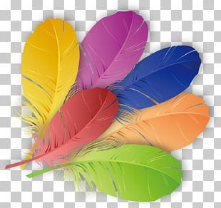 The Floating Feather Color PNG