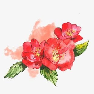 Watercolor Flower Design Elements PNG