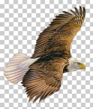 Bird Of Prey PNG