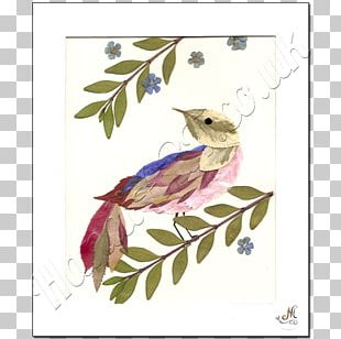 Beak Fauna Character Feather Flowering Plant PNG