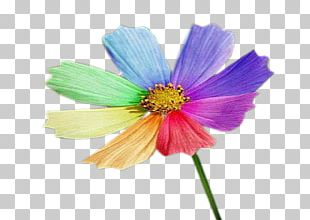 Wildflower Garden Cosmos Petal PNG