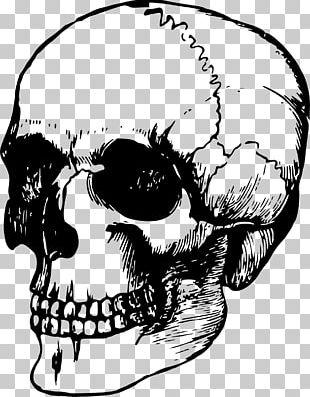 Skull Bone Human Skeleton Anatomy PNG
