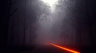 Sunlight Fog Sky Mist PNG