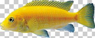 Goldfish Aquariums Coral Reef Fish PNG