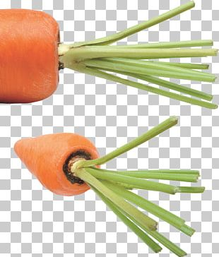 Carrot PNG