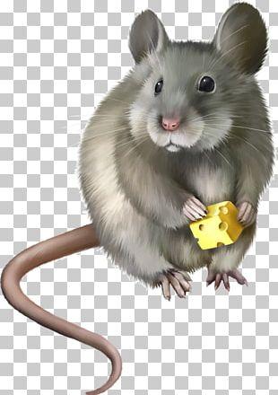Computer Mouse Laboratory Rat PNG