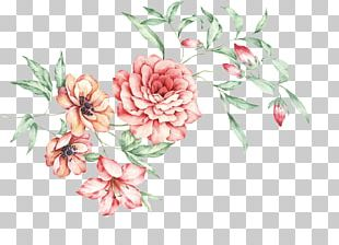 China Floral Design Moutan Peony PNG