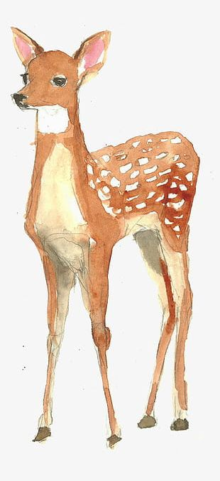 Hand-painted Watercolor Deer PNG
