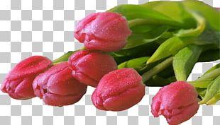 Tulip Flower Bouquet Desktop Display Resolution PNG