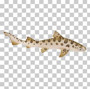Leopard Shark Safari Ltd Cartilaginous Fishes Zebra Shark PNG