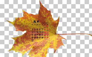 Maple Leaf Desktop Autumn Leaves PNG