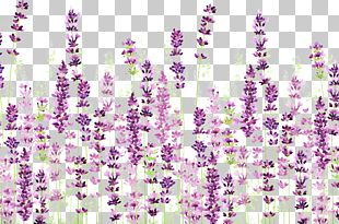 English Lavender Icon PNG