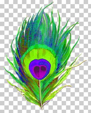Krishna Feather Paper Peafowl Bird PNG