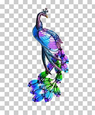 Bird Peafowl Cygnini Drawing Feather PNG