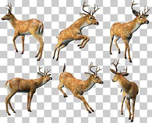 Reindeer Elk White-tailed Deer Musk Deer PNG