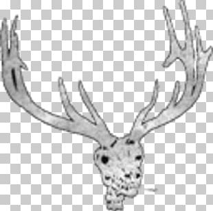 Virginia Beach Elks Lodge #2268 Benevolent And Protective Order Of Elks South First Colonial Road Reindeer Norfolk PNG