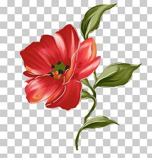 Flower Tulip Floral Design Painting PNG