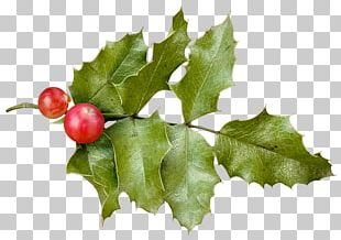 Holly Christmas PNG