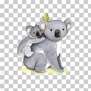 I Dont Like Koala Bear Illustration PNG