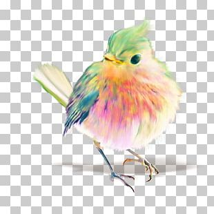 Bird Watercolor Painting Drawing Pastel PNG