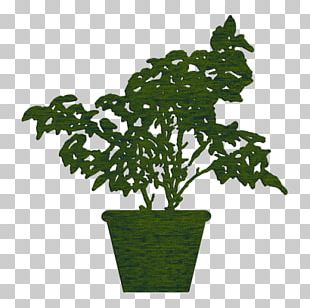 Nature Fig Trees Flowerpot Natural Environment Houseplant PNG