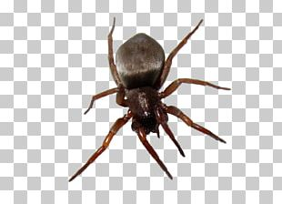 Spider Desktop Clipping Path PNG