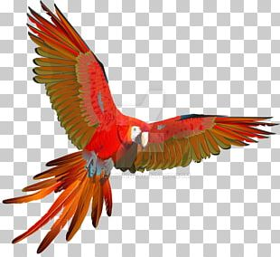 Scarlet Macaw Parrot Red-and-green Macaw Bird PNG