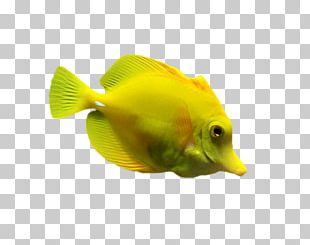 Aquariums Coral Reef Fish Marine Biology PNG