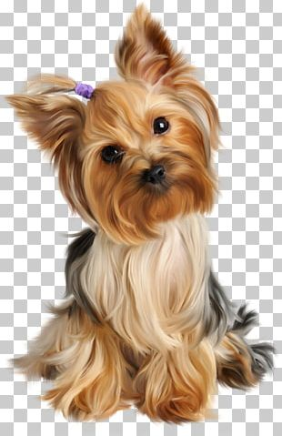 Yorkshire Terrier Puppy Siberian Husky Dog Grooming Pet PNG