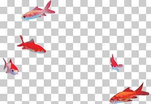 Fin Goldfish RED.M PNG