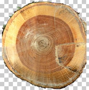 Lumber Tree Annual Plant PNG