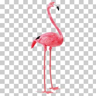 Bird Paper Flamingo Feather Pink PNG
