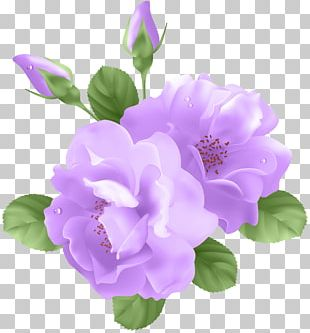 Purple Rose Flower PNG