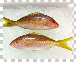 Northern Red Snapper Oily Fish Seafood Marine Biology PNG