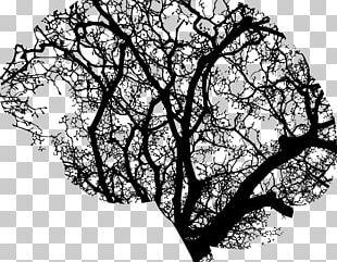 Brain Cognitive Training Tree Human Head PNG