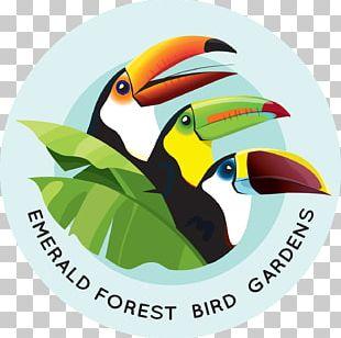 Emerald Forest Bird Gardens Beak Aracari Animal PNG