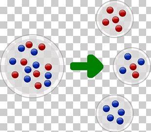 Founder Effect Population Bottleneck Population Genetics Genetic Variability PNG