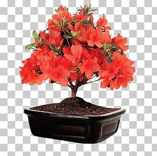 Azalea Rhododendron Flower Shrub Bonsai PNG