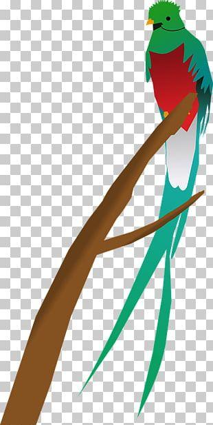 Guatemala Bird Quetzal PNG