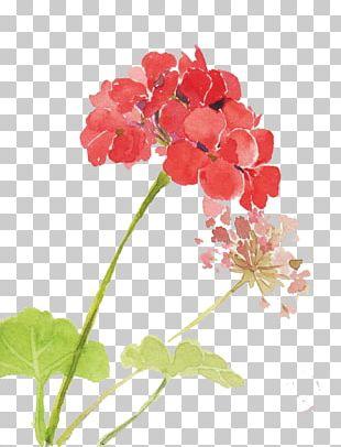 Watercolor: Flowers Watercolor Painting PNG