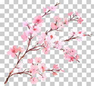 Cherry Blossom Flower Branch Watercolor Painting PNG