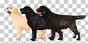 Flat-Coated Retriever Labrador Retriever Newfoundland Dog Dog Breed Cane Corso PNG