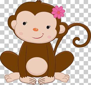 Primate Monkey Ape Infant PNG