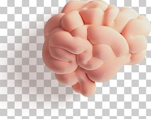 Brain Arithmetic Cerebrum Cerebral Hemisphere Counting PNG