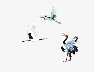 Red-crowned Crane Creative PNG