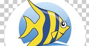 Marine Biology Marine Mammal Fauna PNG
