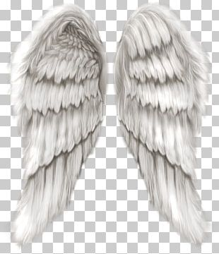 Cherub Wing Angel PNG