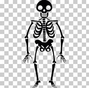 Human Skeleton Icon PNG